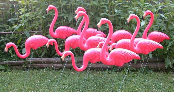 6 Pairs of Flamingos (12 flamingos)