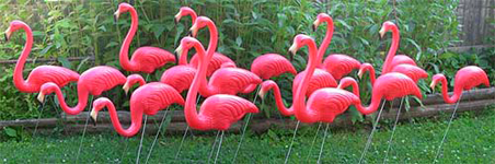 plastic flamingo flock