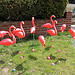 Flamingo Gallery